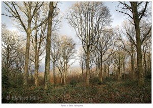 Forest of Bere - Jan 2012 293 e © II resize